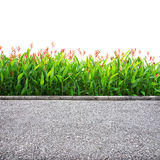 Roadside isolated. Roadside view isolated on white background Royalty Free Stock Photos