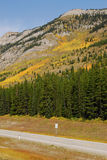 Roadside mountains and forests. Autumn scenic view of rocky mountains, forests and road (highway 40) while traveling in kananaskis country, alberta, canada Stock Photography