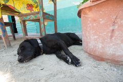 Roadside nap. Dog taking a nap in the shade along a street cafe on Holbox Island, Mexico Stock Photography