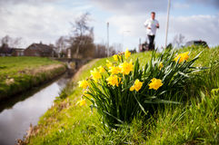Free Roadside Narcis Royalty Free Stock Photography - 66893427
