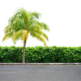 Roadside and palm on white Royalty Free Stock Photos