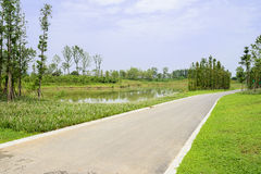 Roadside pond in verdant summer on sunny day Royalty Free Stock Photos