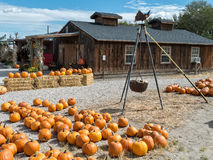 Roadside produce stand and pumpkin patch Stock Photography