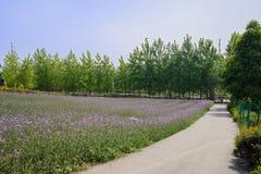 Roadside purple flowers in sunny summer Royalty Free Stock Photo