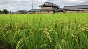 Roadside rice paddy in Nara prefecture, Japan.