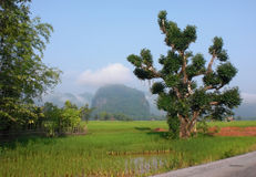 Roadside scenery in Laos Stock Photography