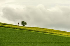 Roadside shrine and lone tree near blossoming rapeseed field in Royalty Free Stock Image