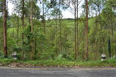 Roadside sloped tree forest, tea garden mountain. Sloped tree forest along an asphalt road, against the backdrop of tea garden mountain, Kerala, India Stock Photos