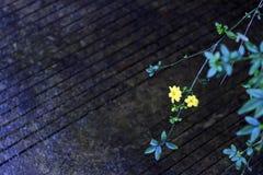 Roadside small yellow flowers Stock Photo