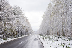 Free Roadside Snowy Trees Stock Photo - 88011570