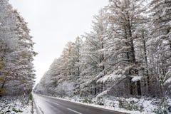 Free Roadside Snowy Trees Stock Photo - 88011630