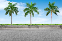 Roadside and three palm trees Stock Photos