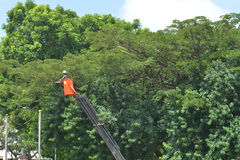 Roadside Tree Pruning stock images