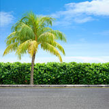 Roadside and tree. Roadside view and palm tree Stock Images