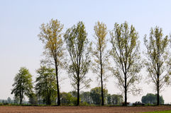 Roadside trees Royalty Free Stock Images