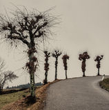 Roadside Trees on a Curve Royalty Free Stock Photography