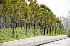 Roadside trees Stock Photography