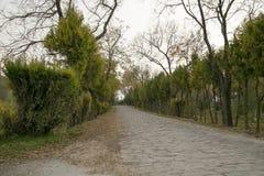 Roadside trees in stony Stock Photos