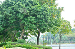 The roadside trees Royalty Free Stock Images