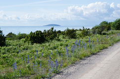 Roadside view at blue flowers by the coast Stock Photo