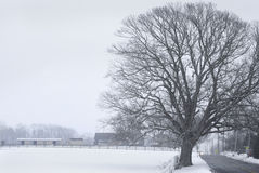 Roadside Winter Tree Royalty Free Stock Photography