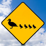 Roadsign warning, ducks with ducklings crossing Stock Photos