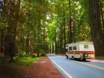 Roadtrip attraverso la foresta della sequoia Immagini Stock Libere da Diritti