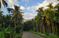 Roadway between Coconut trees. Beauty of nature. A roadway coming from two side coconut trees. With beauty of blue sky. Place kerala royalty free stock photography