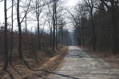 The roadway in the forest. With speed limit road sign and alley of bare trees Stock Photo