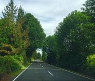 Roadway in New Zealand. Tosh tree flowers road Royalty Free Stock Image