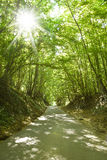 Roadway trough a crowded forest Royalty Free Stock Photos