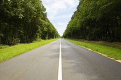 Roadway trough a crowded forest Stock Photo