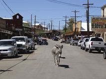 Roaming burro in Oatman, Arizona, August 2014 Royalty Free Stock Photo