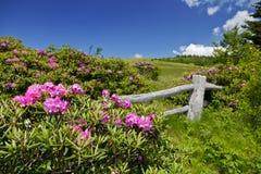 Roan гора Стоковые Изображения