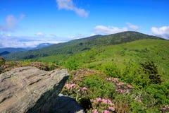 Roan гористые местности Северная Каролина горы стоковое изображение