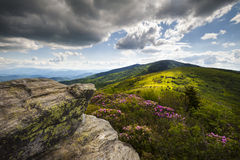 Roan Bloemen NC van de Lente van de Berg Appalachian stock afbeelding