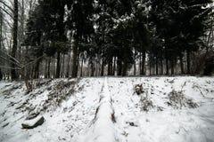 Roan calmo bonito em uma plataforma Dia de inverno carpathians naturalizado fotografia de stock