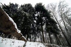 Roan calmo bonito em uma plataforma Dia de inverno carpathians naturalizado imagem de stock