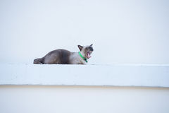 Roan cat on the wall. Stock Image