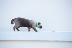 Roan cat on the wall. Stock Photos