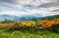 Roan Highlands Appalachian Trail Flame Azalea Scenic Stock Image