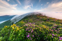 Roan Highlands Appalachian Trail Southern Appalach Royalty Free Stock Image