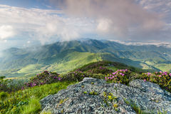 Roan Highlands Southern Appalachian Highland Meadows Stock Image