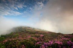 Roan Hooglanden van de Rododendron van Catawba van de Bloei van de berg Stock Foto's