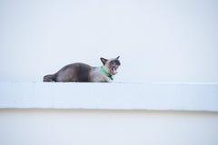 Roan Katze auf der Wand Stockbild