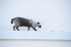 Roan Katze auf der Wand Stockfotos