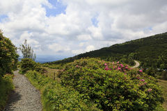 Roan Mountain Royalty Free Stock Photo