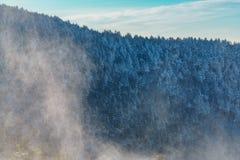 Roan Mountain Royalty Free Stock Image