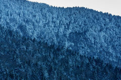 Roan Mountain Stock Image