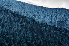 Roan Mountain Stock Images